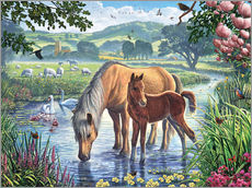 Sticker mural  Poneys de race fell - Steve Crisp