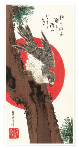 Poster Falcon, Pine, and New Year Sunrise