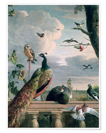 Poster  Palace of Amsterdam with Exotic Birds - Melchior de Hondecoeter