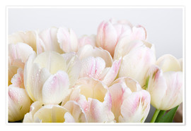 Poster Tulipes pastel 06
