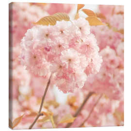 Toile  Japan Cherry - INA FineArt