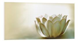 Forex  White Lotus - Christine Ganz