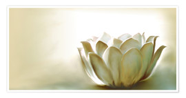 Poster  White Lotus - Christine Ganz