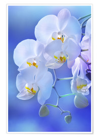 Poster Orchid