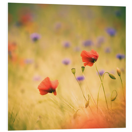 Tableau en PVC  Wind Poppy - Moqui, Daniela Beyer