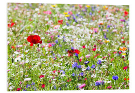 Tableau en PVC  Colorful Meadow - Suzka