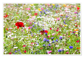Poster  Colorful Meadow - Suzka