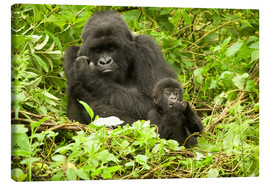 Toile  Eastern Gorilla with baby between leaves - Joe & Mary Ann McDonald