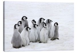 Tableau sur toile  Emperor penguin chicks on ice - Keren Su