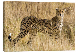 Toile  Cheetah stands between dry grasses - Ralph H. Bendjebar