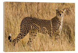 Bois  Cheetah stands between dry grasses - Ralph H. Bendjebar