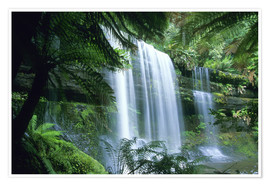 Poster  Russell Falls and tree ferns - Kevin Schafer