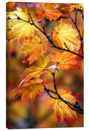 Toile  Maple leaves in autumn - Janell Davidson