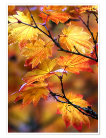 Poster Maple leaves in autumn