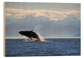 Bois  Humpback Whale on Frederick Sound - Paul Souders