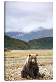 Toile  Grizzly bear resting against Kinak Bay - Paul Souders