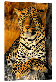 Verre acrylique  African Leopard - Dave Welling
