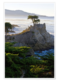 Ralph H. Bendjebar - The famous Lone Cypress on the California coast