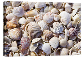 Tableau sur toile  Collection shell - Rob Tilley