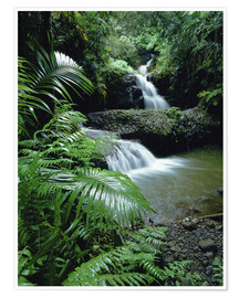 Poster  Waterfall in the island of hawaii - Douglas Peebles