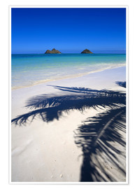 Poster  Palm shadow on Lanikai Beach - Douglas Peebles