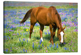 Toile  Horse on a meadow with wildflowers - Darrell Gulin