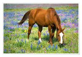 Poster  Horse on a meadow with wildflowers - Darrell Gulin