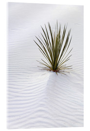 Verre acrylique  Yucca plant on a sand dune - Don Grall