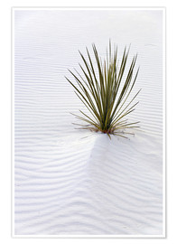 Poster  Yucca plant on a sand dune - Don Grall