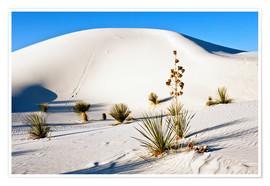 Poster  White Sands National Monument - Transverse Dunes and Soaptree Yucca - Bernard Friel