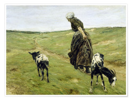 Poster Woman with goats in the dunes