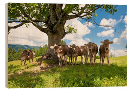 Jan Schuler - Young Cows