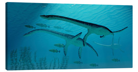 Tableau sur toile  Three Plesiosaurus dinosaurs migrate with a school of fish. - Corey Ford