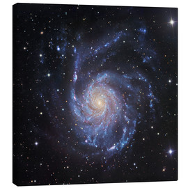 Tableau sur toile  M101, The Pinwheel Galaxy in Ursa Major - Robert Gendler
