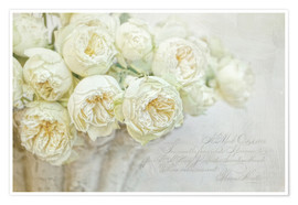 Poster  Roses blanches - Lizzy Pe