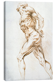 Toile  Anatomical study - Peter Paul Rubens