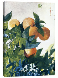 Tableau sur toile  Oranges on a Branch - Winslow Homer