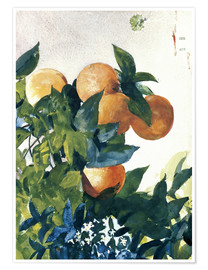 Poster  Oranges on a Branch - Winslow Homer