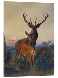 Tableau en verre acrylique  A Stag with Deer at Sunset - Charles Jones