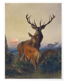 Poster A Stag with Deer at Sunset