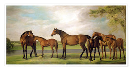 Poster Mares, foals and an approaching storm