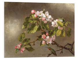 Tableau en PVC  Apple Blossoms and a Hummingbird - Martin Johnson Heade