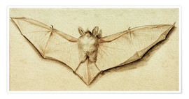 Poster  Bat with spread wings - Hans Holbein d.J.