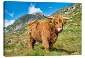 Tableau sur toile  Scottish Highland Cattle - Olaf Protze