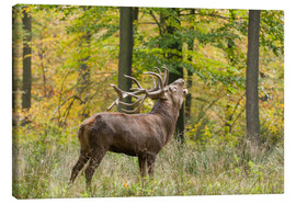Toile  The call of the deer - Ingo Gerlach