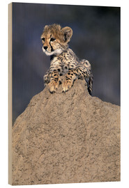 Bois  A small Cheetah - Theo Allofs