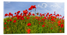 Verre acrylique  Photo panoramique de coquelicots - Melanie Viola