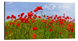 Tableau en aluminium  Photo panoramique de coquelicots - Melanie Viola