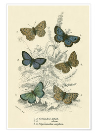 Poster  Butterflies - English School