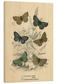 Tableau en bois  Butterflies - English School